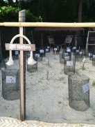 The turtle hatchery